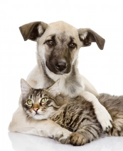 An image of a puppy and a cat happily sitting together