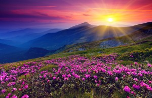 This is the image of a mountain range with beautiful magenta flowers in the foreground