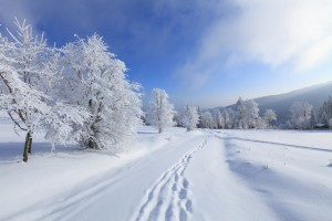 This is the image of blue sky and a snowy scenery with footprints in the snow and snow covered trees