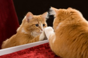This is the image of an orange tabby cat with his paw on the mirror as he looks at his reflection