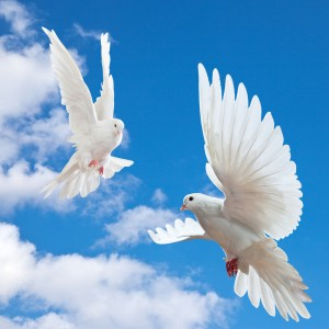 This is the image of two Doves flying in a beautiful blue sky